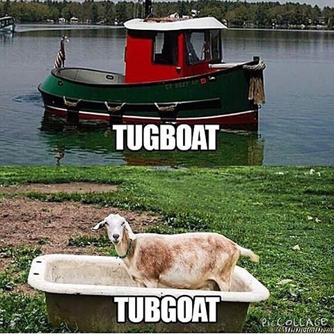 words2-tubgoat